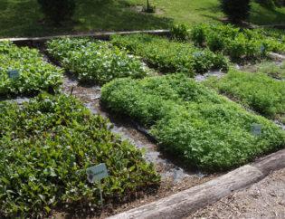 Ο λαχανόκηπος Ζέλιος ΓΗ