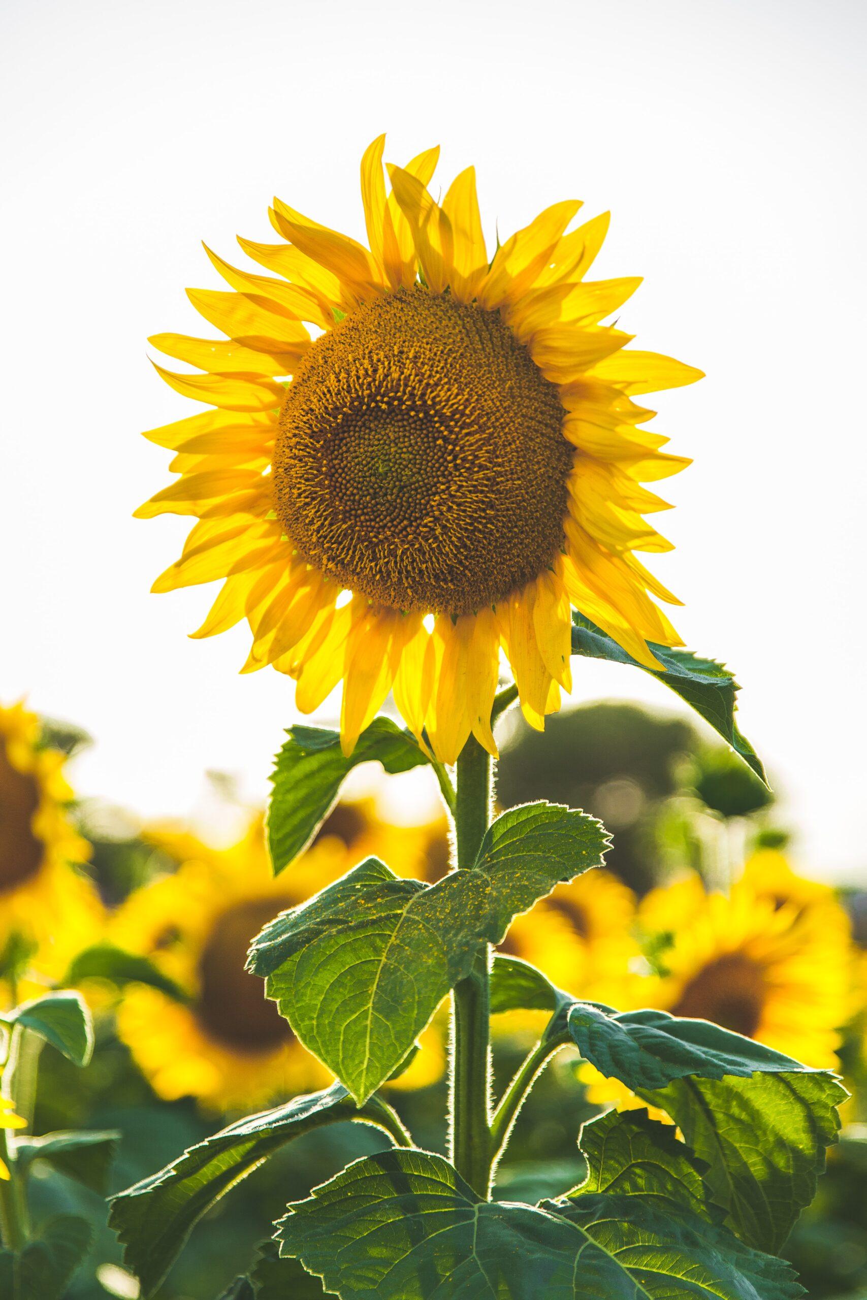 Τα καλά του ήλιου - Όλα όσα θετικά κάνει στον οργανισμό 1