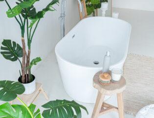 Φυτά ... για το μπάνιο σας 6