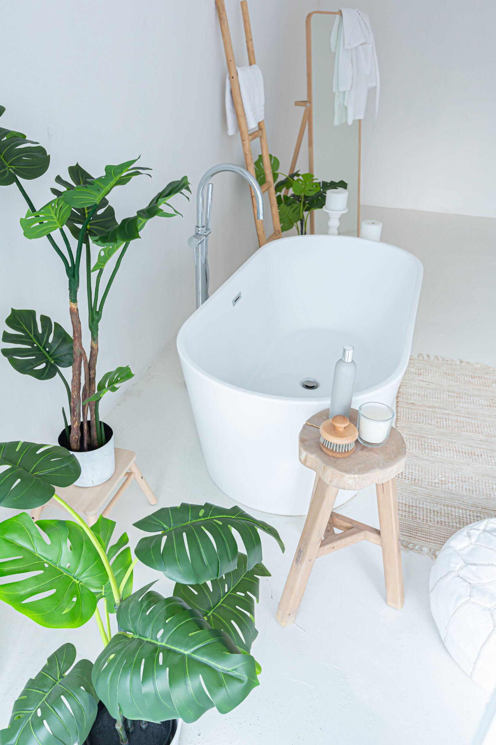 Φυτά ... για το μπάνιο σας 1